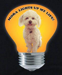 LightBulbOnlyforWeb